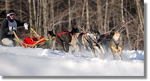 Maine Lakes Mushers Bowl Dog sledding