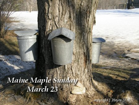 Maine Maple Sunday